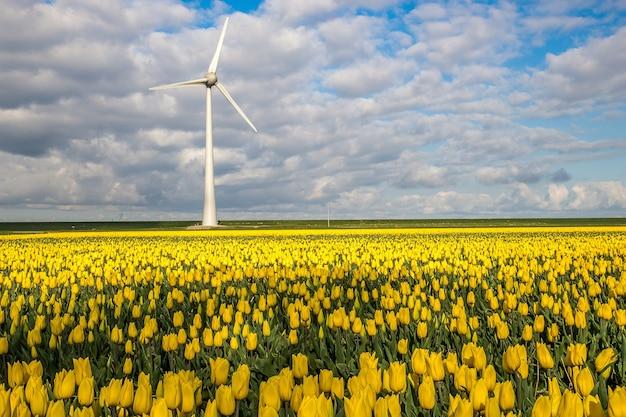Bella ripresa di un campo di fiori gialli con un mulino a vento in lontananza sotto un cielo nuvoloso