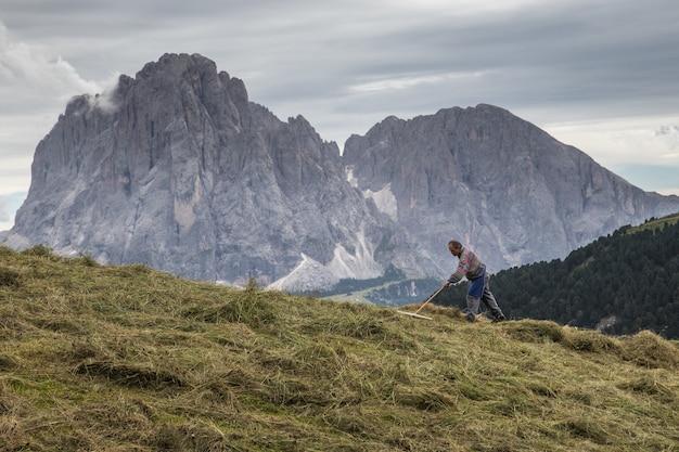 Bella ripresa di un contadino che rastrella il campo con il parco naturale puez-odle, italia
