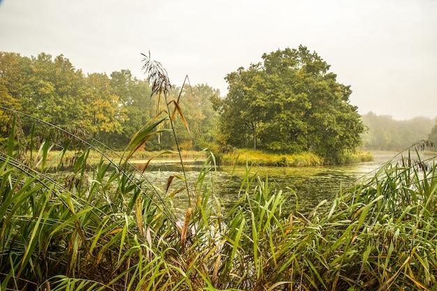 Bella ripresa di un parco con alberi e un lago in una giornata nuvolosa