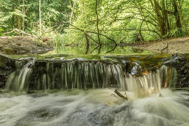 Bella ripresa di un ruscello d'acqua in mezzo al verde degli alberi della foresta