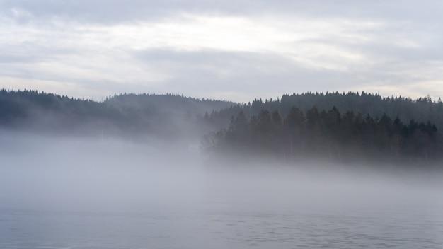 Bella ripresa di una foresta di abeti ricoperta di nebbia