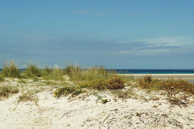 Bella ripresa di una spiaggia sabbiosa piena di cespugli a tarifa, spagna