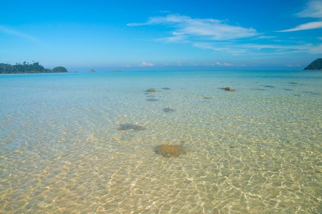 Bella scena, mare tropicale e spiaggia con sfondo blu cielo
