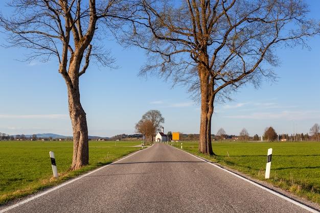 Bella strada rurale con alberi ed erba colorata