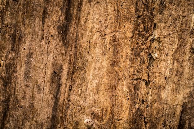 Bella vecchia struttura di legno naturale, primo piano