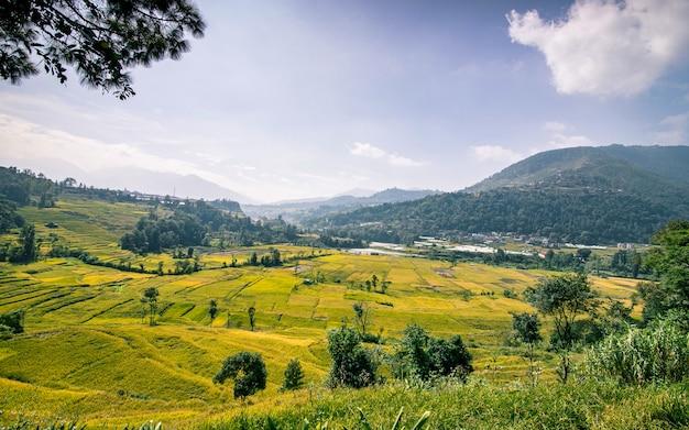 Bella vista del paesaggio della risaia a khokana, lalitpur, nepal.