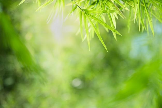 Bella vista del primo piano della foglia di bambù di verde della natura su pianta vaga