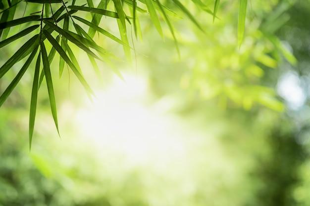 Bella vista del primo piano delle foglie verdi della natura sul fondo vago dell'albero della pianta con luce solare