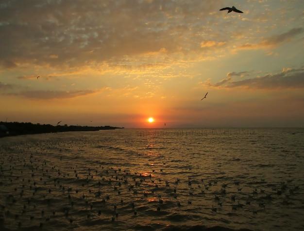 Bella vista del sole che sorge sul golfo della thailandia con gabbiani innumerevoli