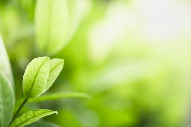 Bella vista delle foglie verdi della natura sul fondo vago dell'albero della pianta con luce solare