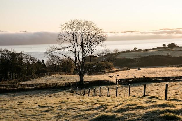 Bella vista di un albero isolato in un campo con un oceano calmo e montagne sullo sfondo