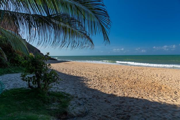 Bella vista di un albero sulla spiaggia sabbiosa dall'oceano calmo catturato in pipa, brasile