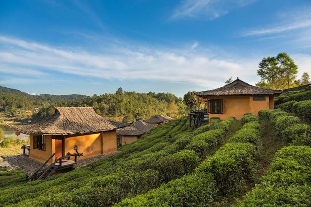 Bella vista scenica della casa nel campo del tè sulla montagna in mae hong son, tailandia