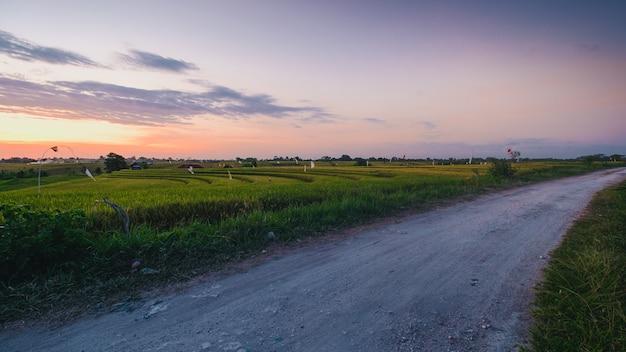 Bella vista su una strada circondata da campi coperti di erba catturati a canggu, bali