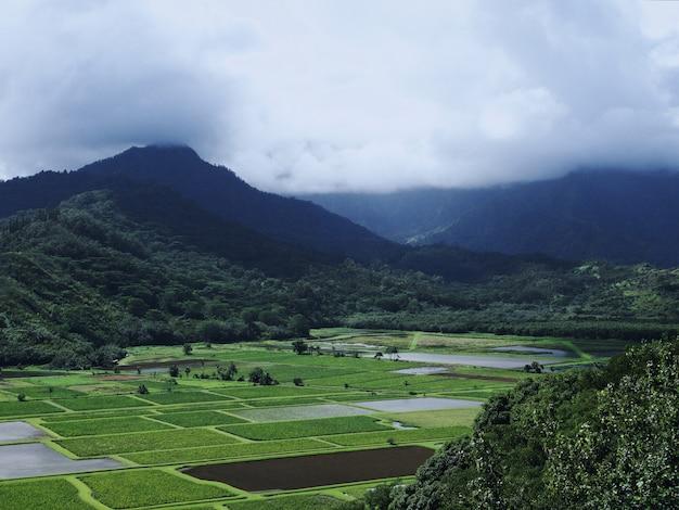 Bella vista sui campi verdi con le magnifiche montagne nebbiose