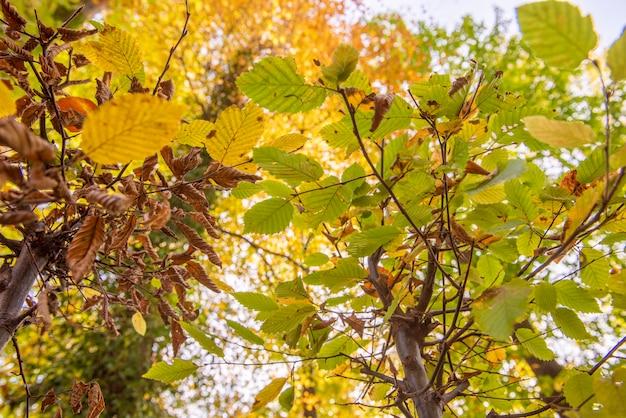 Bella vista sulla foresta in autunno