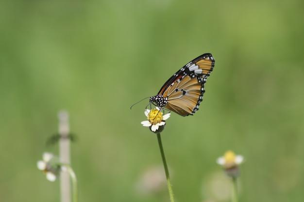 Belle farfalle sulle foglie