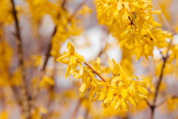 Belle foglie autunnali gialle, arancioni e rosse nel bellissimo parco autunnale