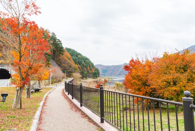 Belle foglie colorate