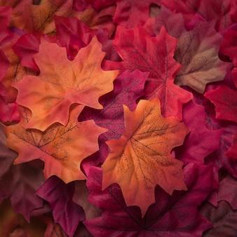 Belle foglie d'acero strutturate di autunno