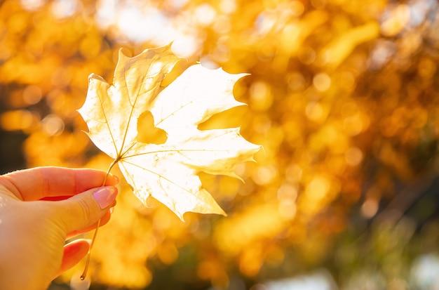 Belle foglie d'autunno. autunno dorato. messa a fuoco selettiva
