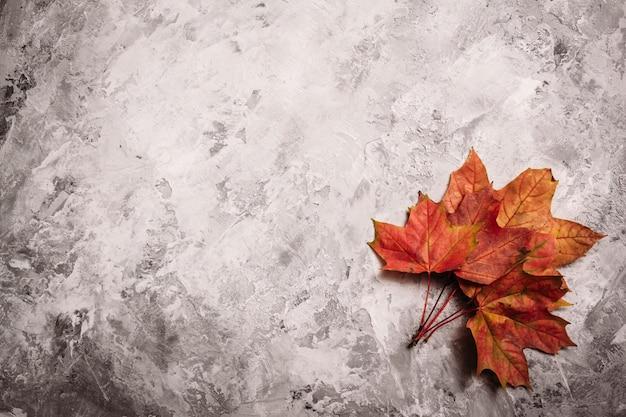 Belle foglie di acero cadute rosse su calcestruzzo