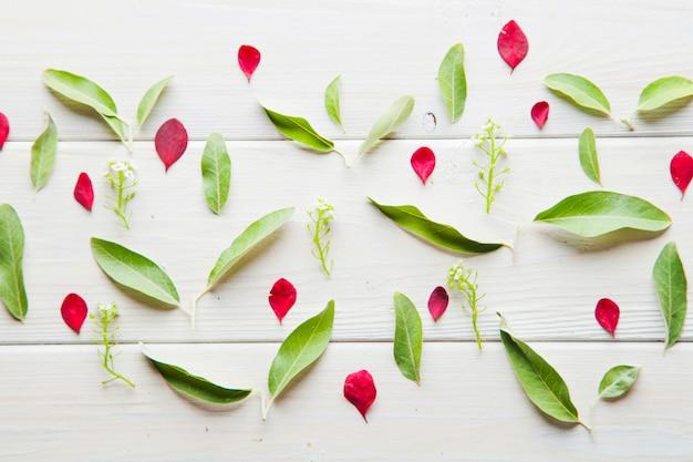 Belle foglie di og fresca composizione