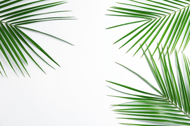 Belle foglie di palma su sfondo bianco, vista dall'alto e spazio per il testo. pianta esotica