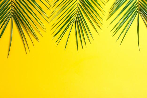 Belle foglie di palma su sfondo di colore, vista dall'alto e spazio per il testo. pianta esotica