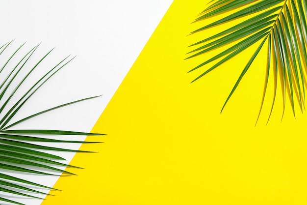 Belle foglie di palma su uno sfondo di due toni, vista dall'alto e spazio per il testo. pianta esotica