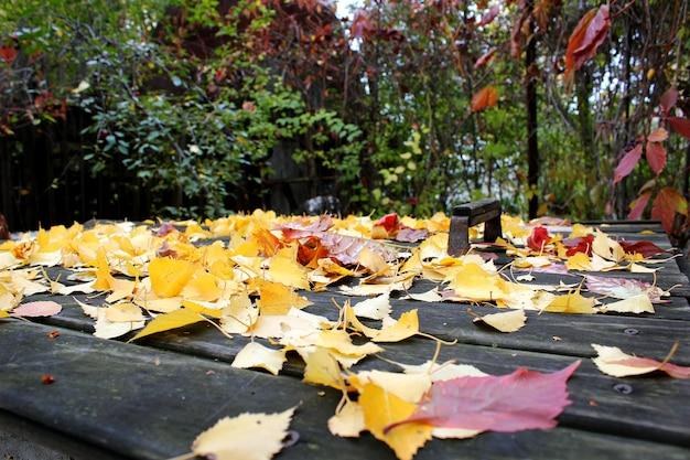 Belle foglie gialle autunnali