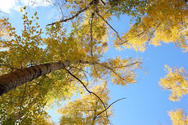 Belle foglie gialle e rosse di tempo di autunno, sugli alberi.