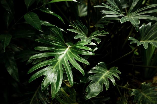 Belle foglie tropicali nella foresta