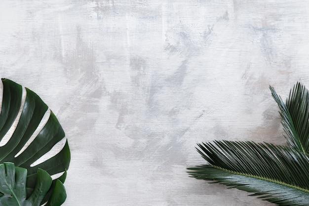 Belle foglie tropicali su uno sfondo bianco. banner poster, modello di cartolina.