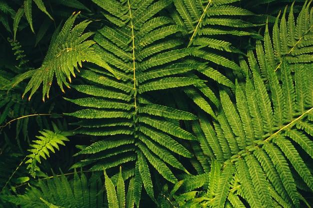 Belle foglie verdi di felci. fogliame verde fiore