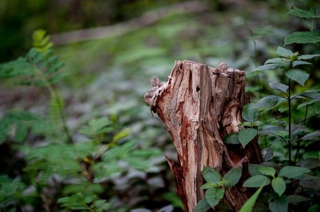 Belle foglie verdi durante la stagione delle piogge