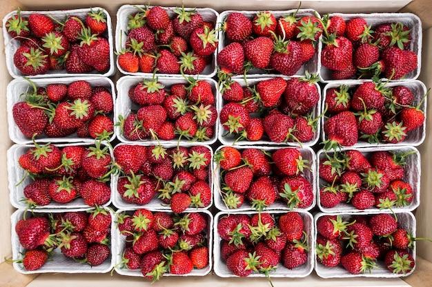 Belle fragole rosse in un mercato degli agricoltori