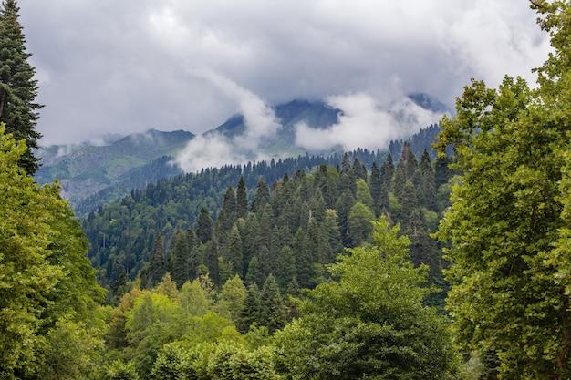 Belle montagne e alberi nel caucaso