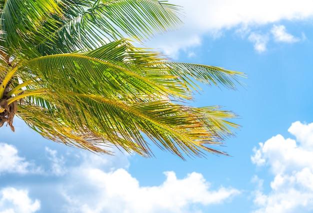 Belle palme nel fondo del cielo blu