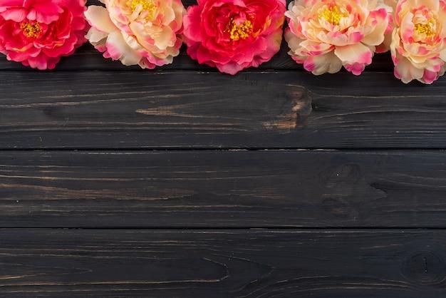 Belle peonie fresche sulla superficie in legno