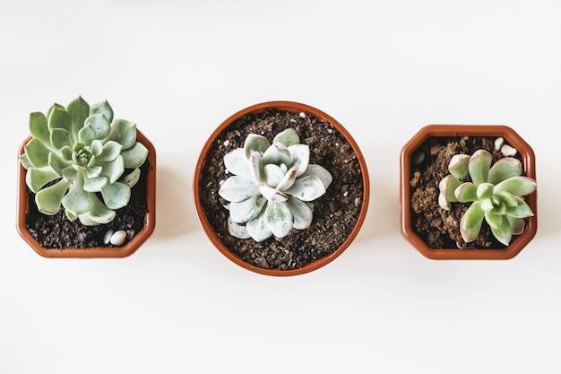 Belle piante succulente in vaso su una vista bianca del piano d'appoggio
