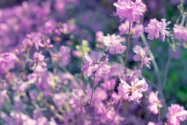 Belle rami con fiori rosmarino sullo sfondo del cielo defocus
