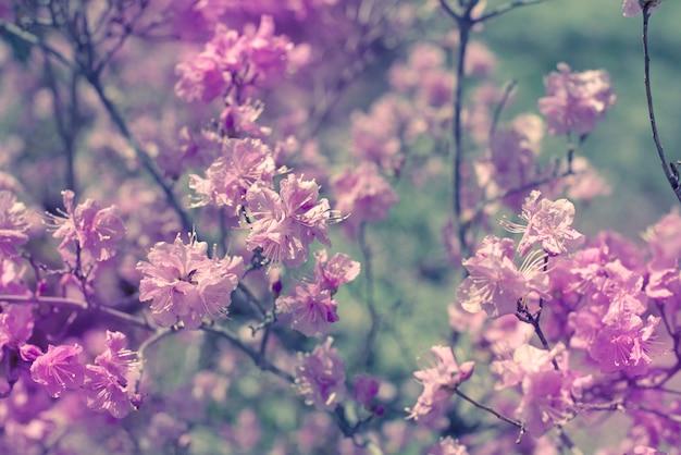Belle rami con fiori rosmarino sullo sfondo del cielo.