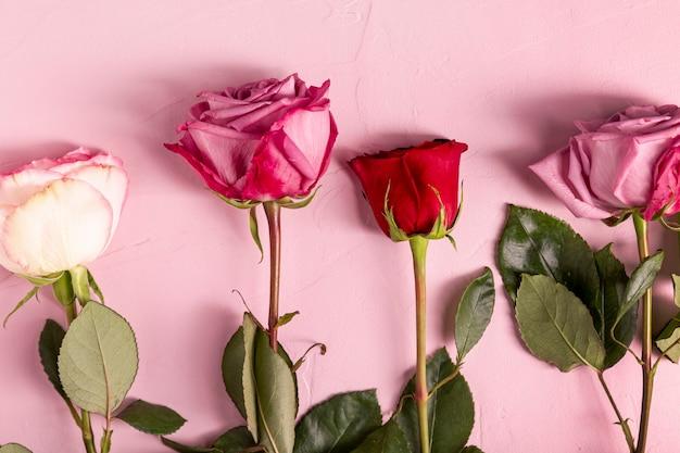 Belle rose in posa piatta