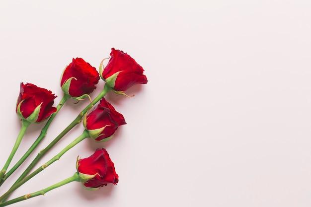 Belle rose rosse su sfondo bianco