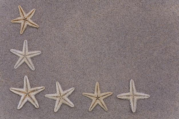 Belle stelle marine sulla sabbia. macro con copia spazio inclusa.