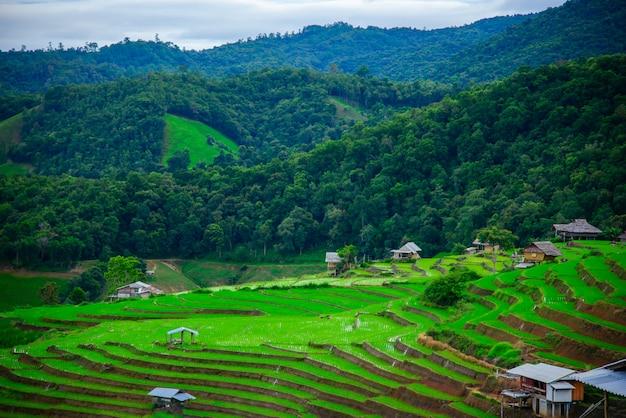 Belle terrazze di riso di pa bong piang al villaggio di pa bong piang a mae cham, chiangmai, thailandia