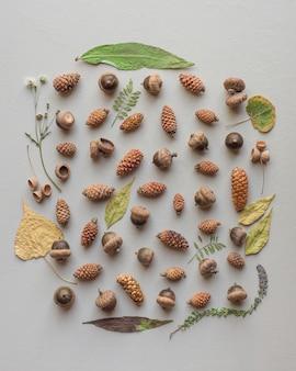 Bellissima collezione naturale di diversi tipi di pigne e ghiande con una cornice a foglia