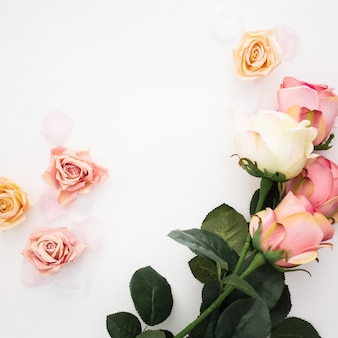 Bellissima composizione realizzata con rose su fondo bianco