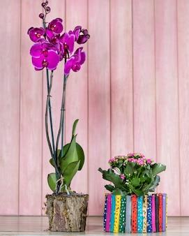 Bellissima orchidea colorata, begonia, gardenia con spazio rosa
